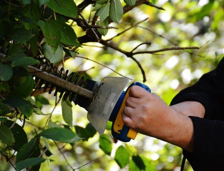 bush, cut, gardening