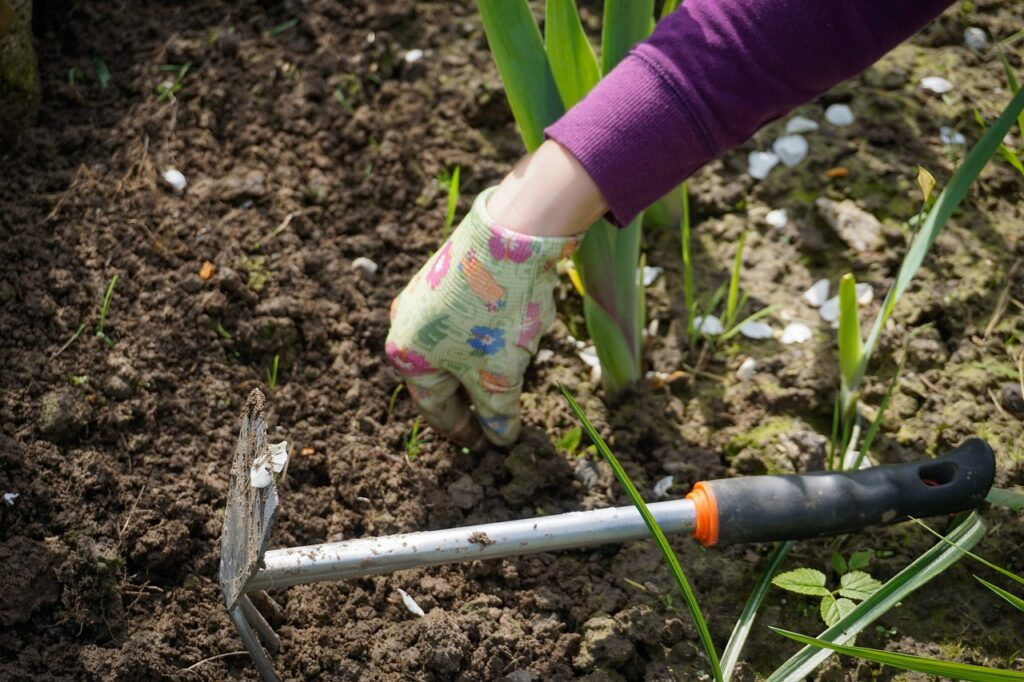 work in the garden, garden, digging